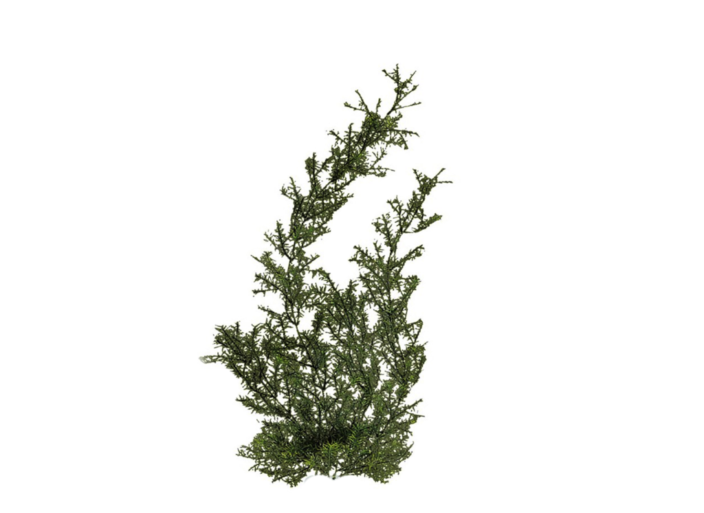png plant tree