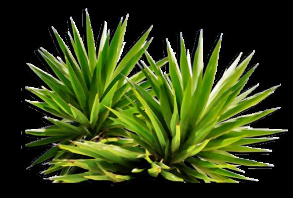 png plants nature