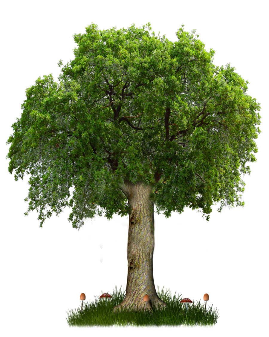 png tree 8 by paradise234 d5hfi67