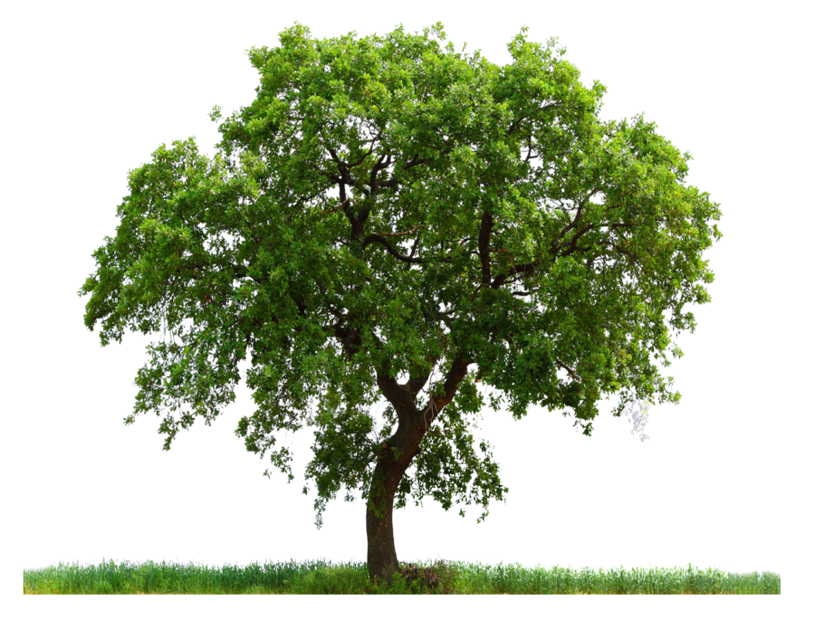 High Resolution Tree Png Icon