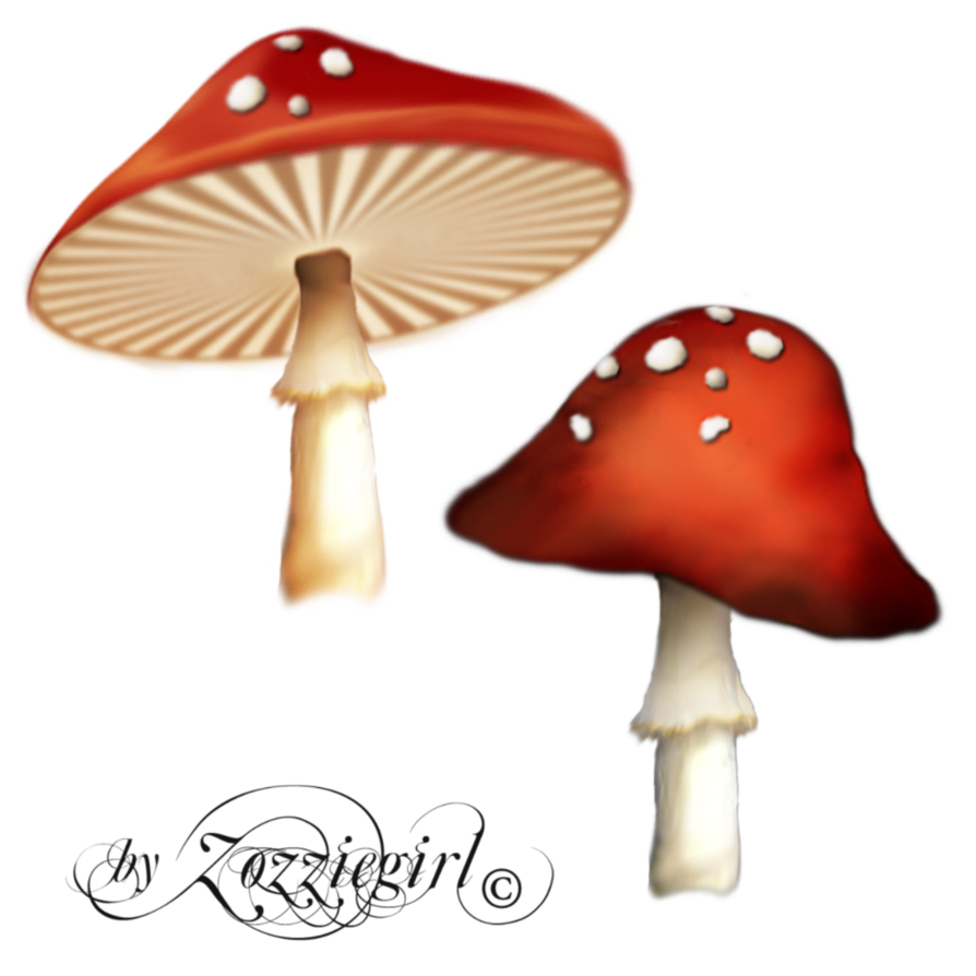 Poisonous Red Mushroom png