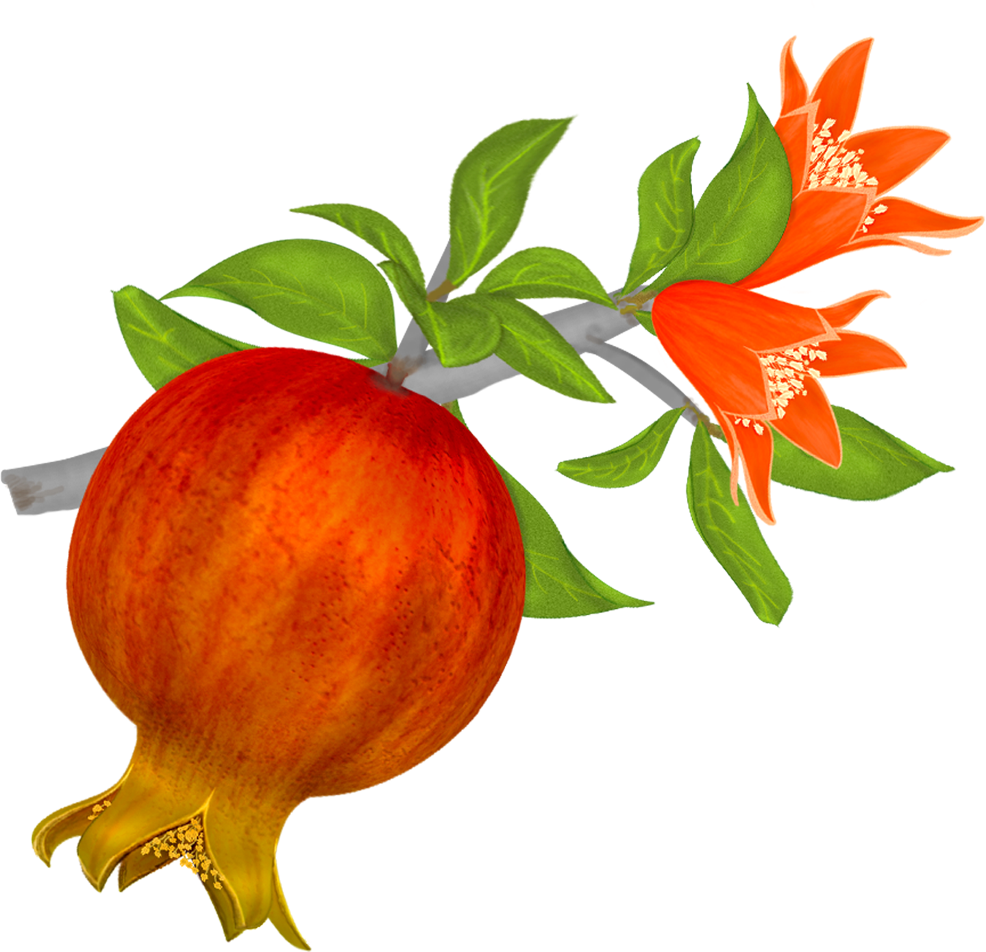 High Resolution Pomegranate Png Clipart image #27843