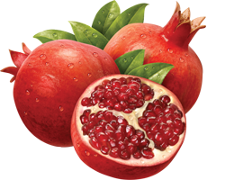 Png Image Pomegranate Collections Best image #27845