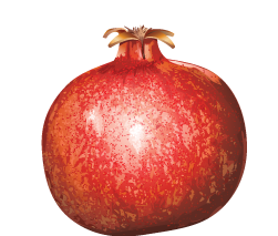 High Resolution Pomegranate Png Clipart image #27850