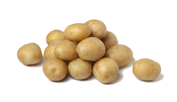 Potato Free Vector Png Download image #38706