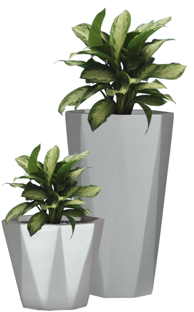 Potted Plant Png Pictures image #44927