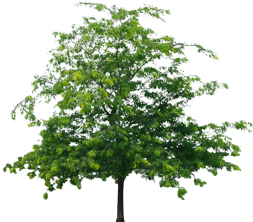 Best Tree Clipart Png