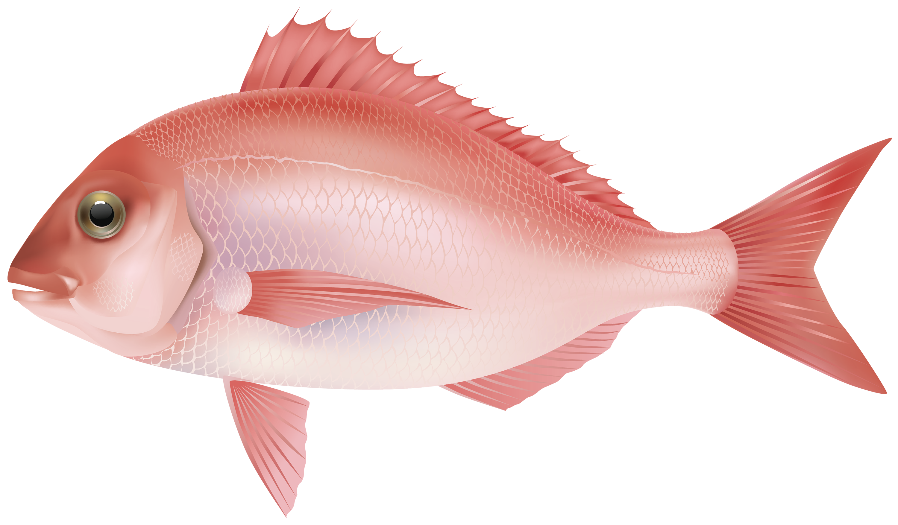 Purple Fish PNG