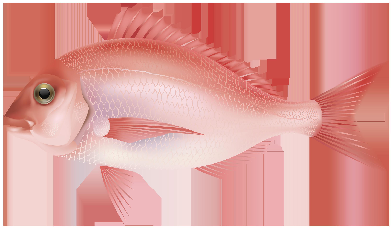 Purple Fish PNG