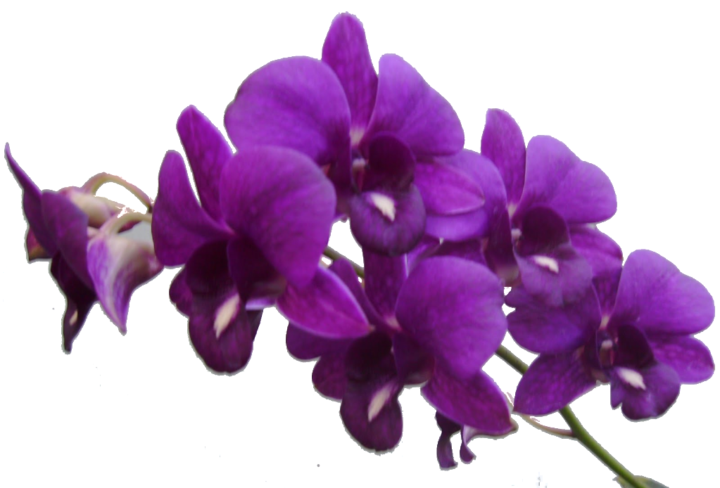 Purple Flower Frame Png Res Purple Flowers Png by