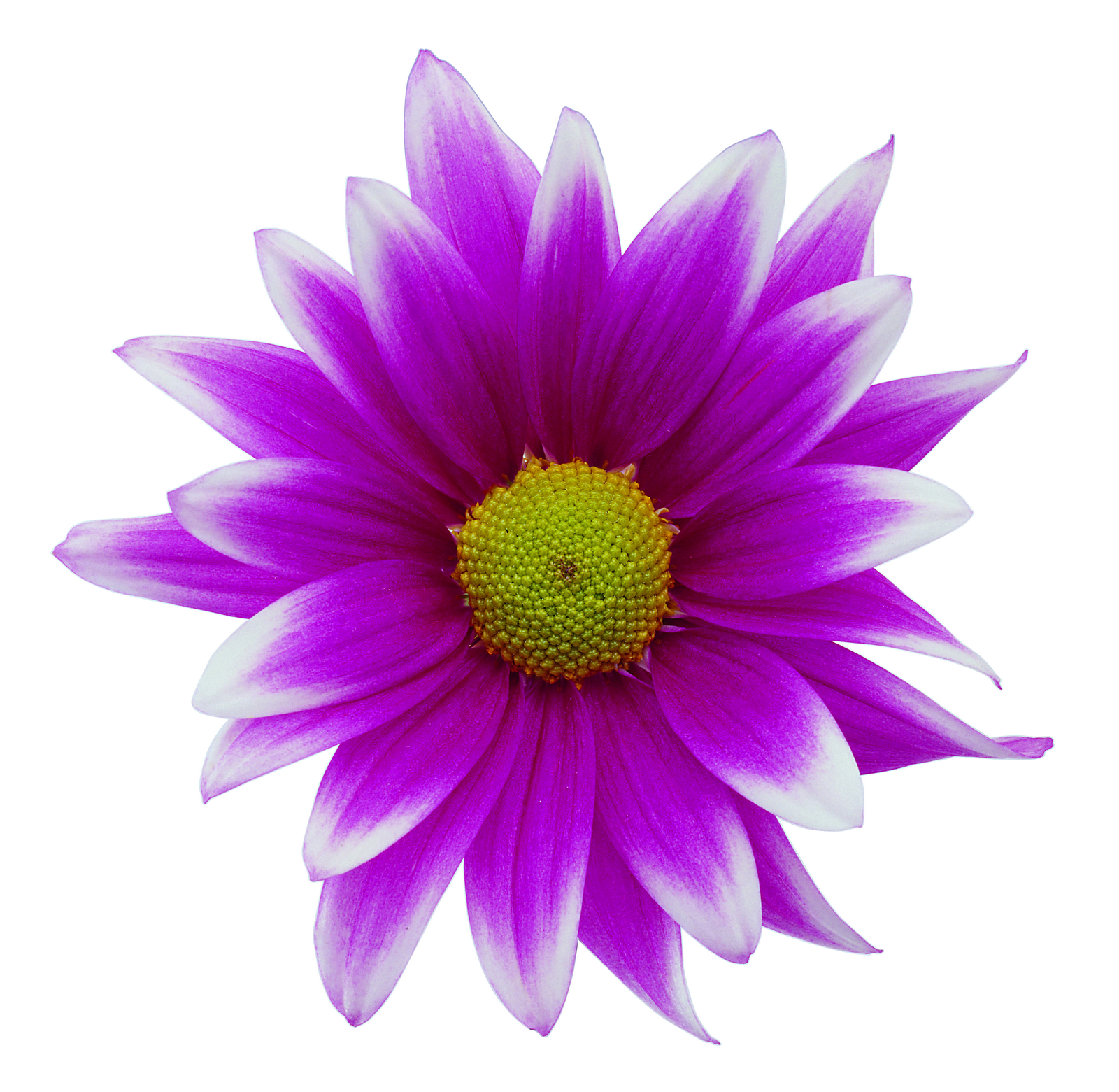 Purple Flower Png image #6210