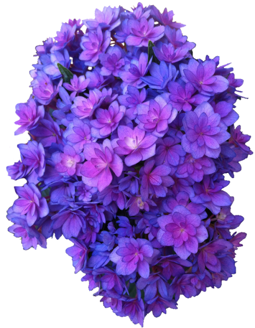 Free Purple Flower Icon Vectors Download image #6240