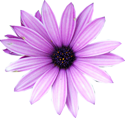 Purple Flower Png Available In Different Size