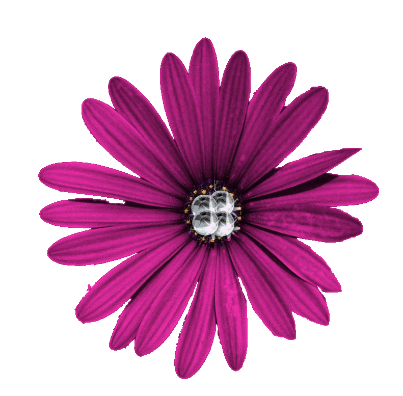 Purple Flower Png High-quality Download image #6214