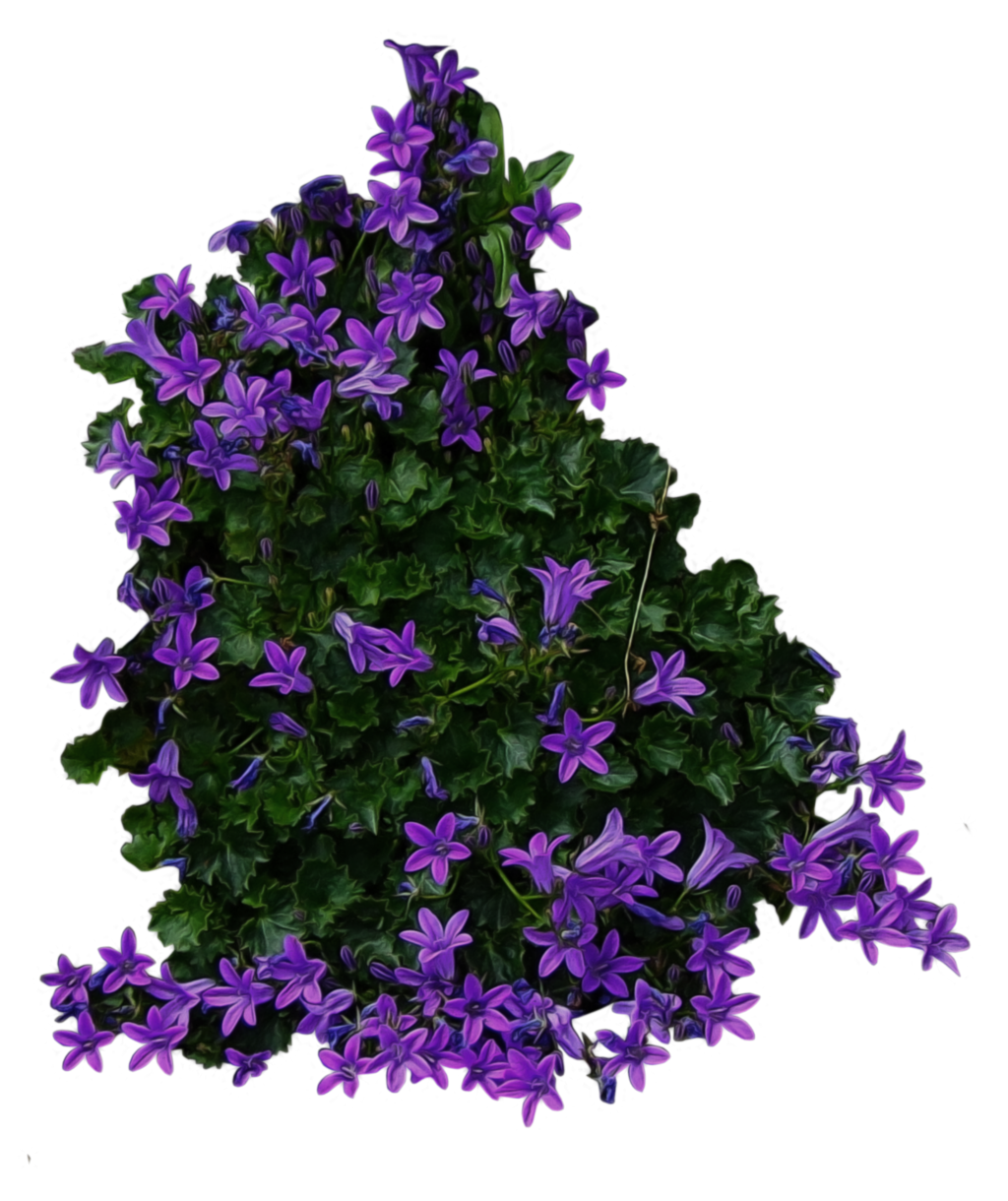 Purple Flowery Bushes PNG image #42036