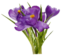 Purple Spring Flowers png