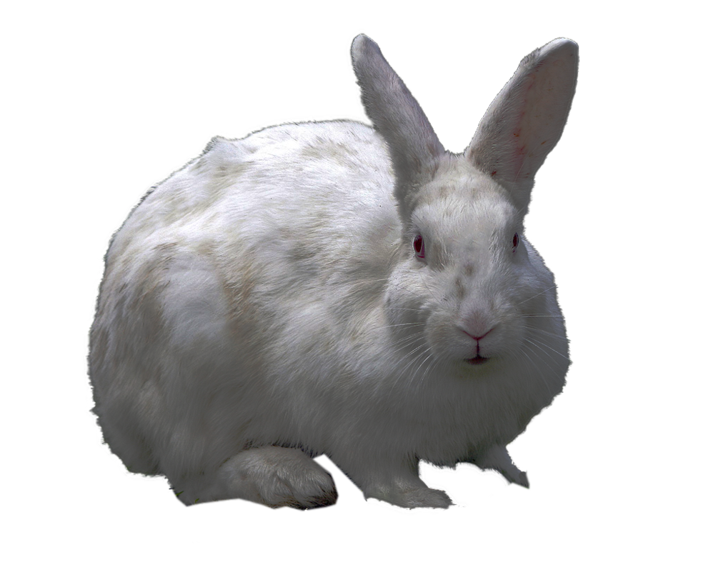 Png Collection Rabbit Clipart image #40331
