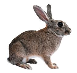 Browse And Download Rabbit Png Pictures image #40333
