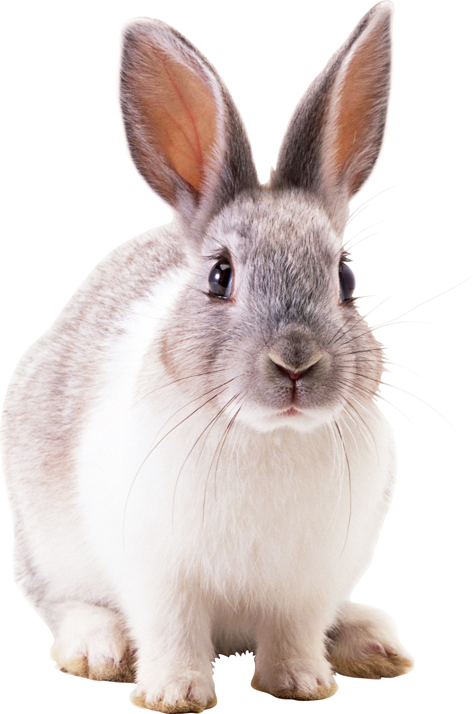 Icon Download Free Vectors Rabbit image #40335