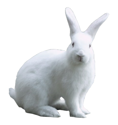 Background Transparent Rabbit Png image #40337