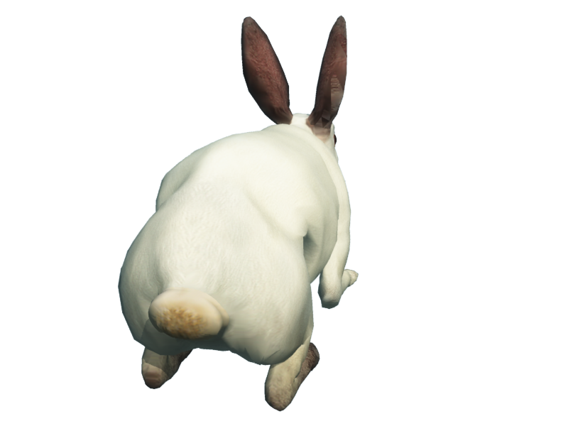 Rabbit Png image #40339