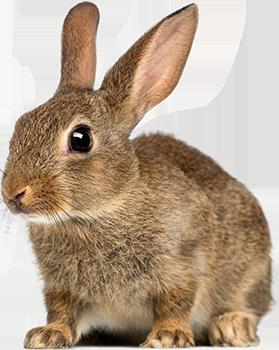 Rabbit Png image #40344