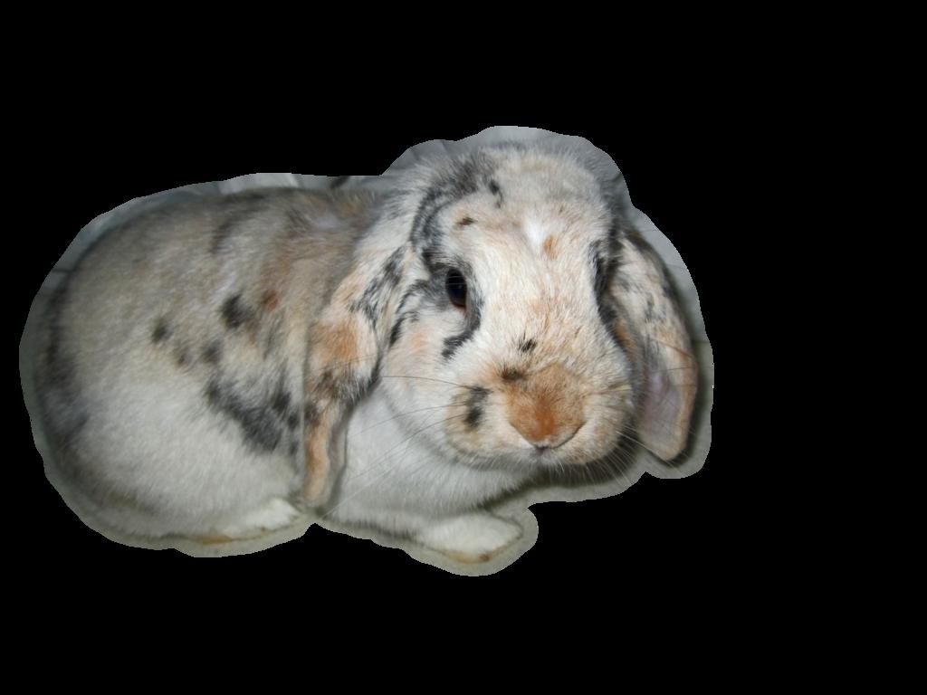Rabbit Png image #40345