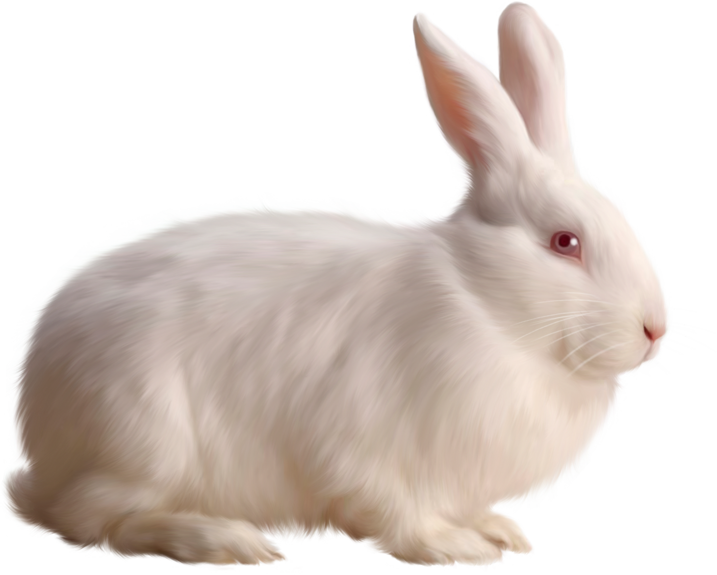 Rabbit Png image #40322