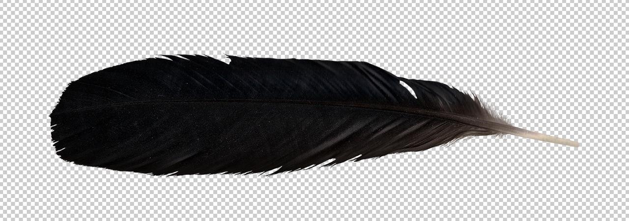 raven feather transparent