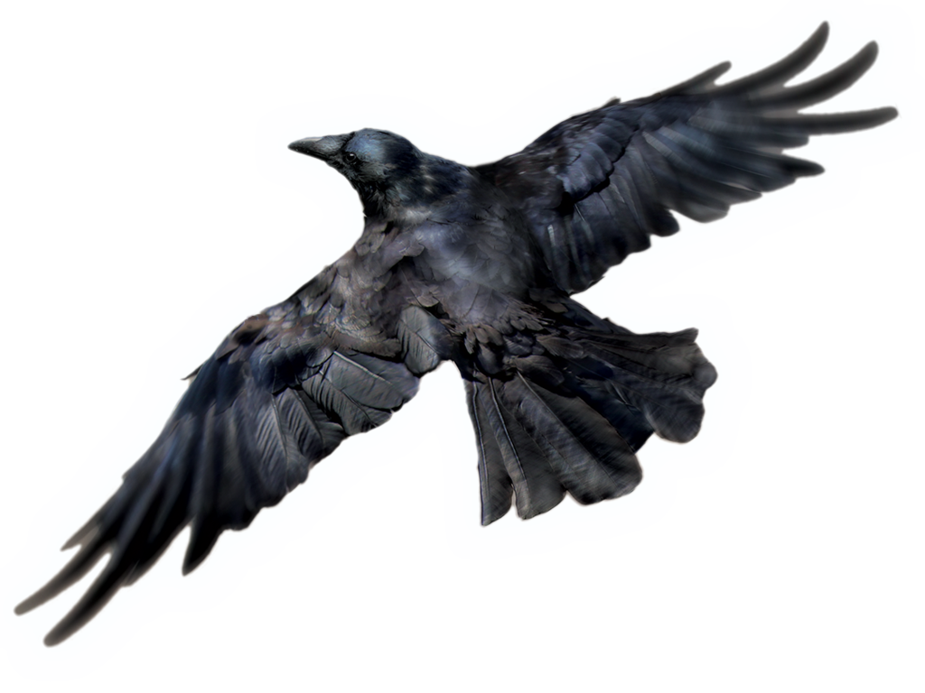 Free Download Of Raven Icon Clipart image #32692
