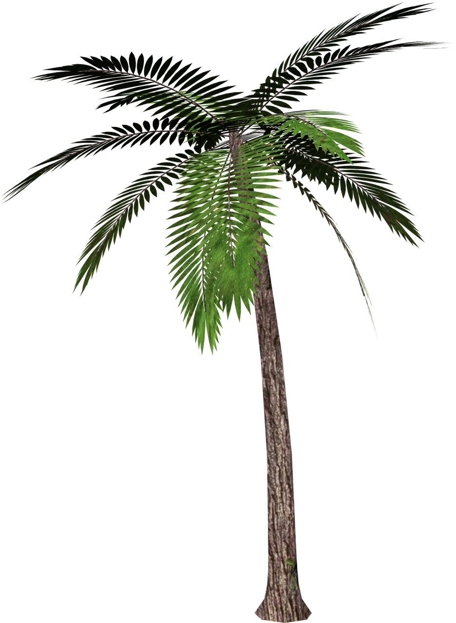 Real Coconut Tree Background image #46399