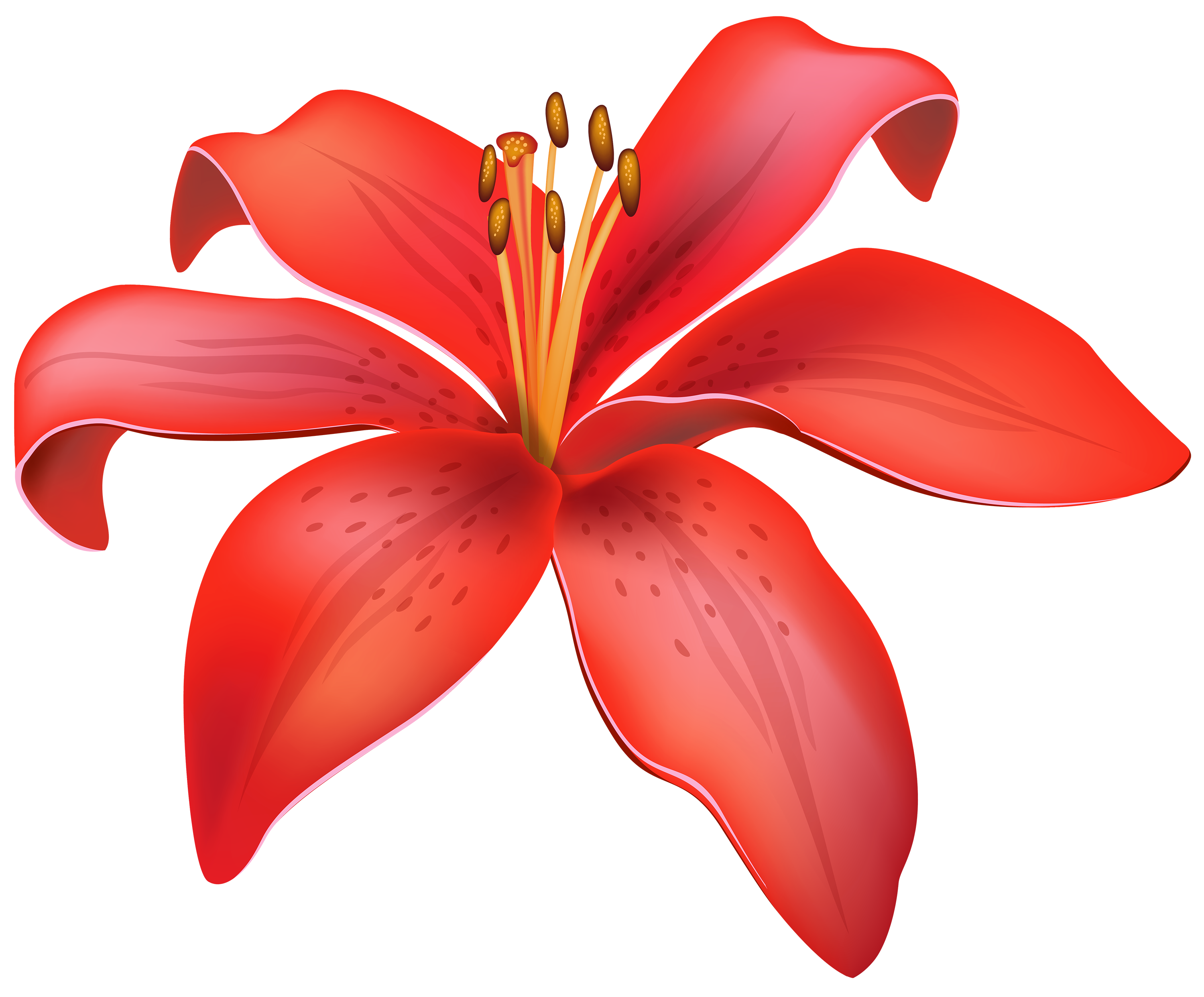 Red Lily PNG HD image #46492