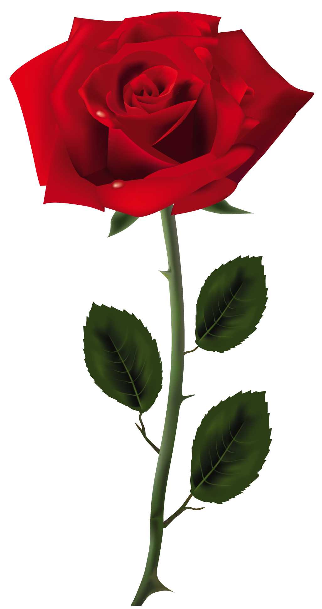 Rose Transparent PNG Pictures - Free Icons and PNG Backgrounds