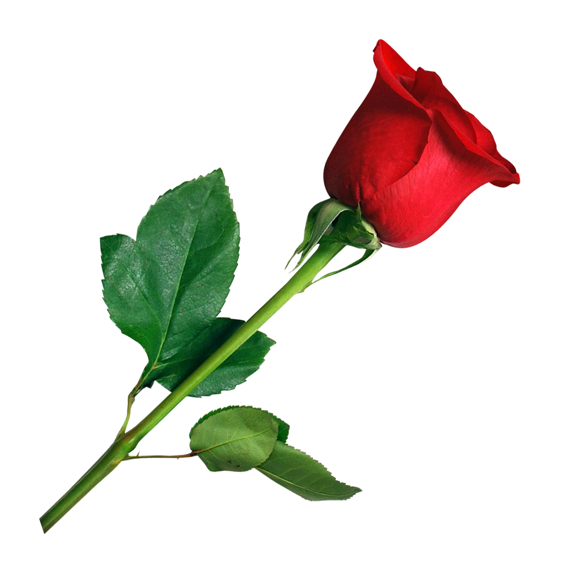 Red Roses With Leaf Png image #39851