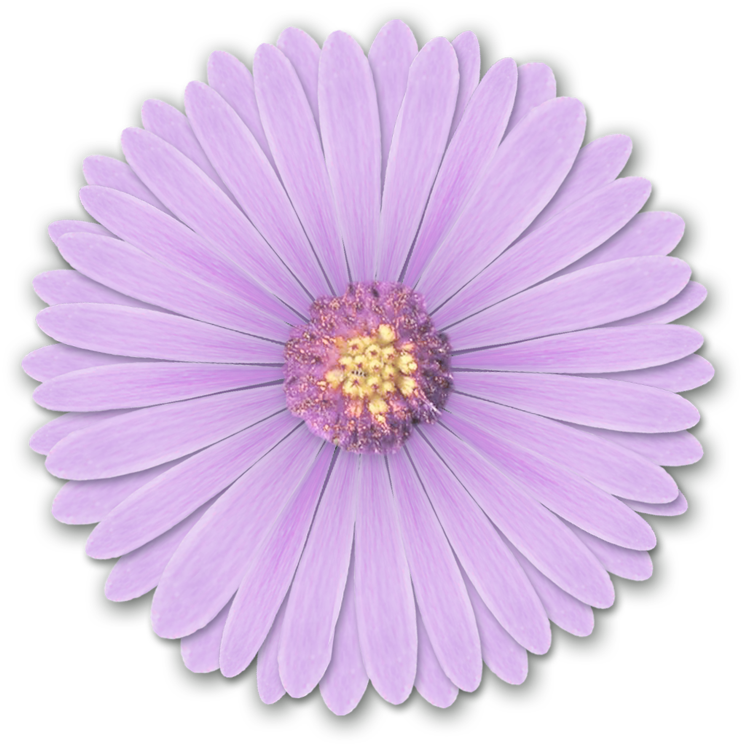 res light purple flowers png by hanabell1 d6l6mwr png
