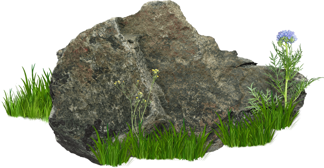 Rocks with grass and flower png