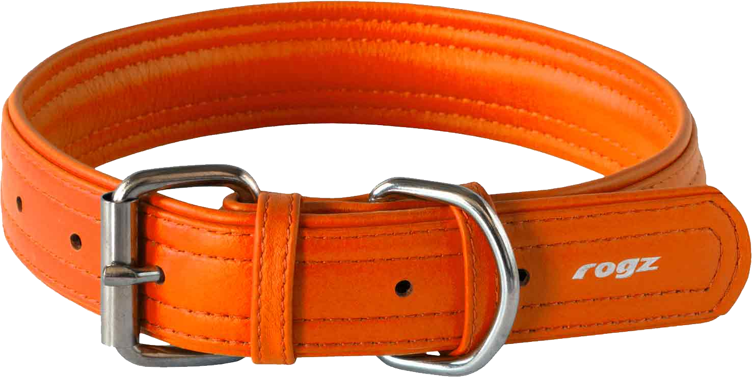 Rogi Dog Collar Orange Belt Pictures image #48122