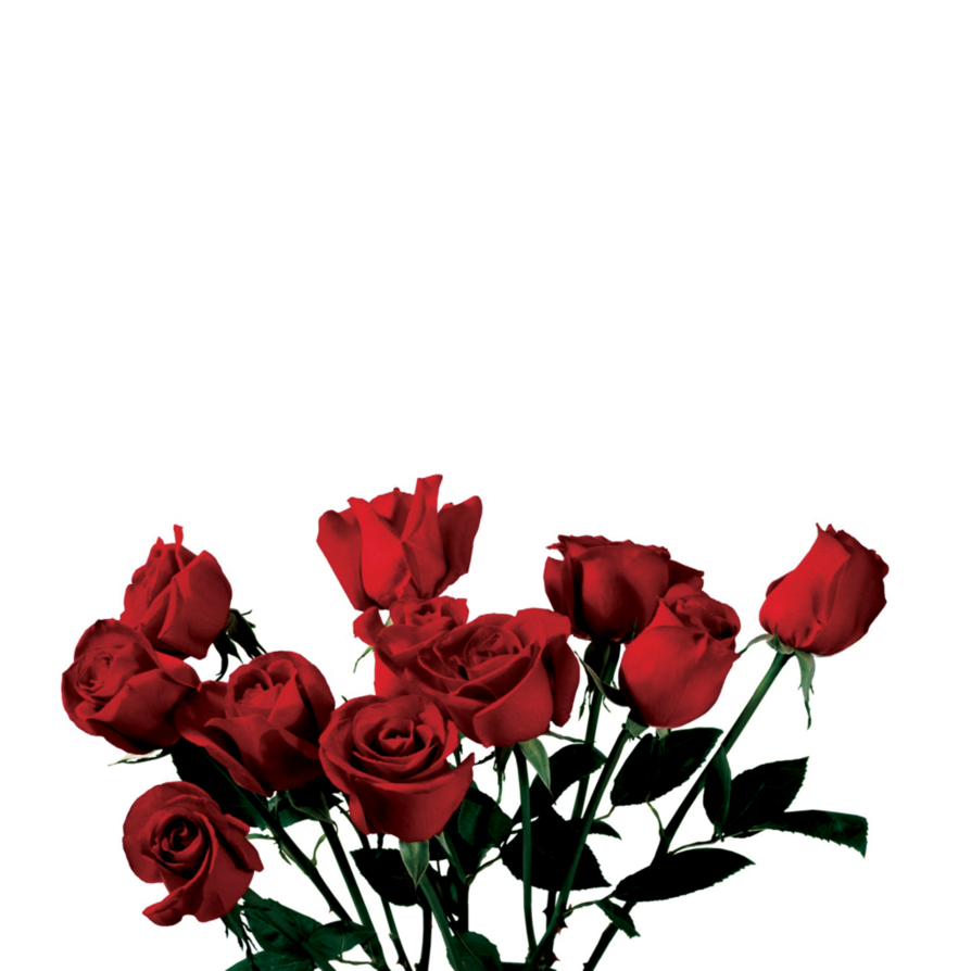 Photo Rose PNG image #18981