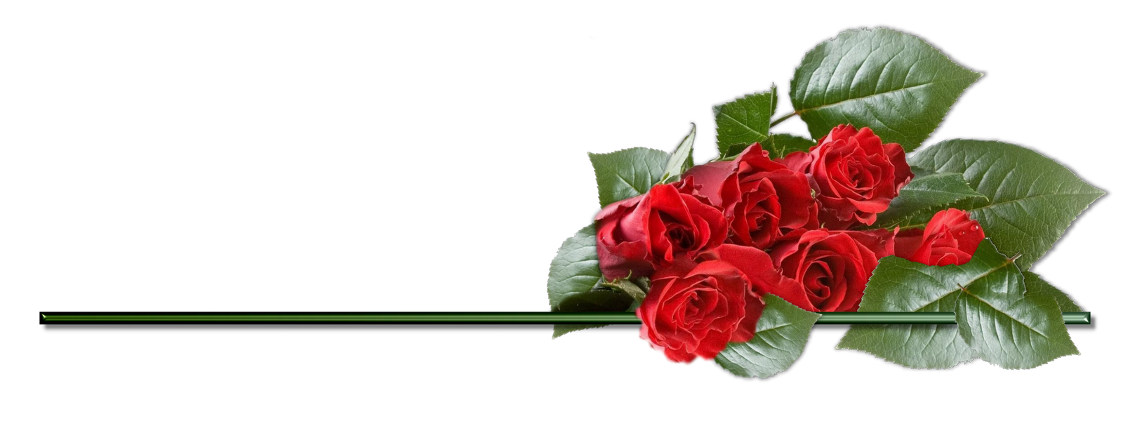 Rose Png - Page 2 - Free Icons and PNG Backgrounds for Transparent Png Images Roses  585eri