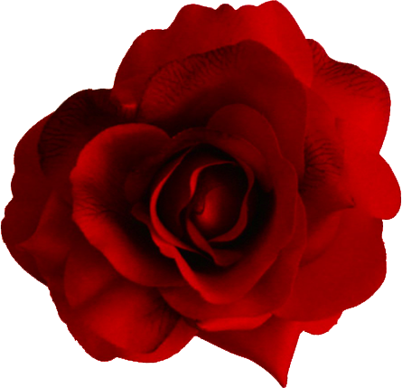 Transparent Rose PNG image #18986