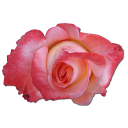 Free Download Rose Png Vector image #13898