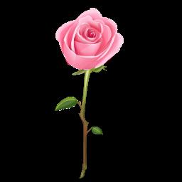 Cygańskie szlaki Roses-icon-4