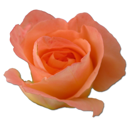 Svg Rose Free