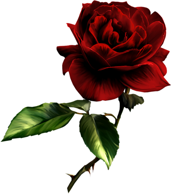 Png Vector Rose