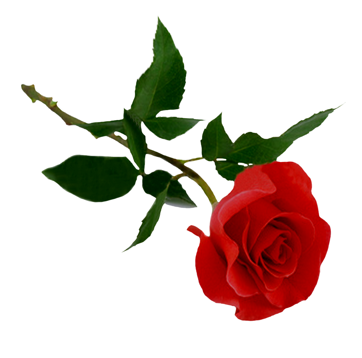 High-quality Rose Cliparts For Free! image #39869