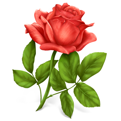 High Resolution Rose Png Icon image #39871