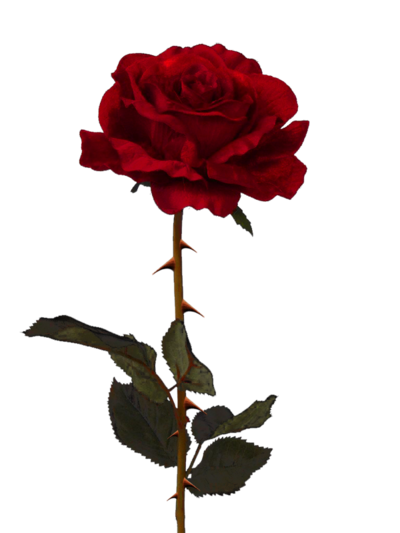 Rose Png Available In Different Size image #39872