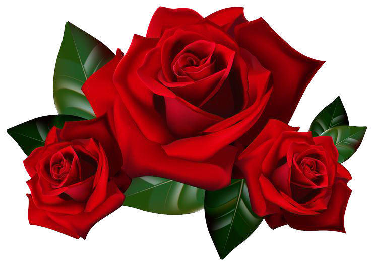 roses png hd wedding  39859