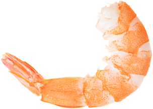 Transparent Shrimps Background