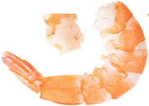 sea food shrimps png